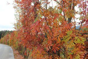 Herbststimmung_IMG_3417